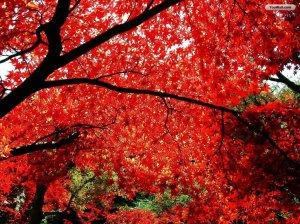 autumn_tree_wallpaper_76a2d