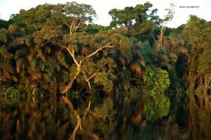 floresta do congo