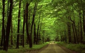 floresta-no-parque-nacional-na-pennsylvania