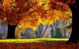 leaves-wallpaper-1280x800-1010098