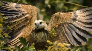 animais do pantanal 8