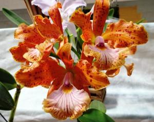Exposição Orquídeas - Flávio Sena(1)