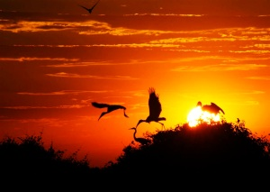 Por-do-Sol, Pantanal Transpantaneira Poconé-MT